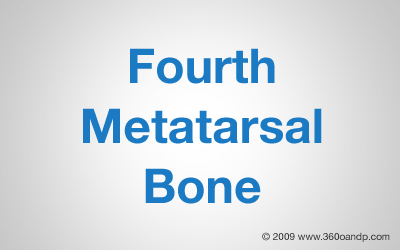 Fourth Metatarsal Bone
